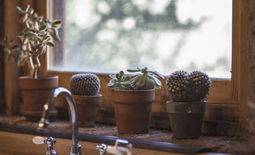 kitchen window with little pots of cactus by kitchen sink