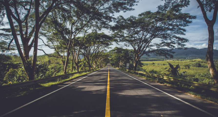 Road with trees on each side