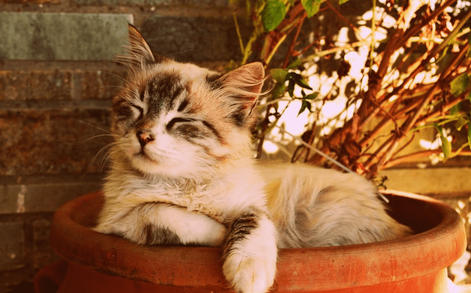 Kitten sleeping in a plant pot