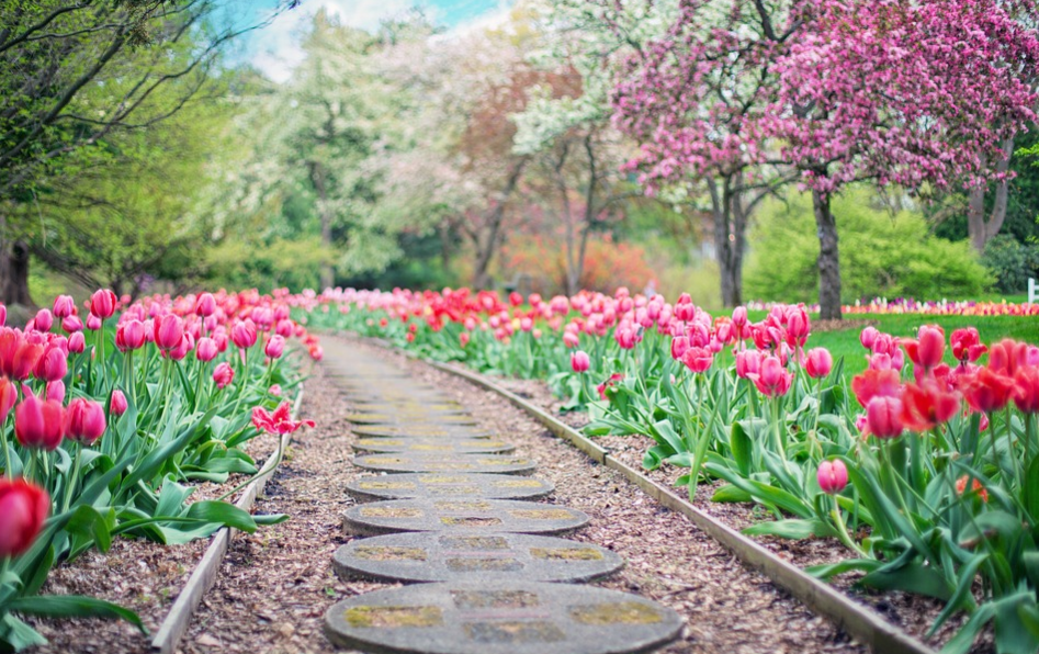 Garden of tulips with walking path