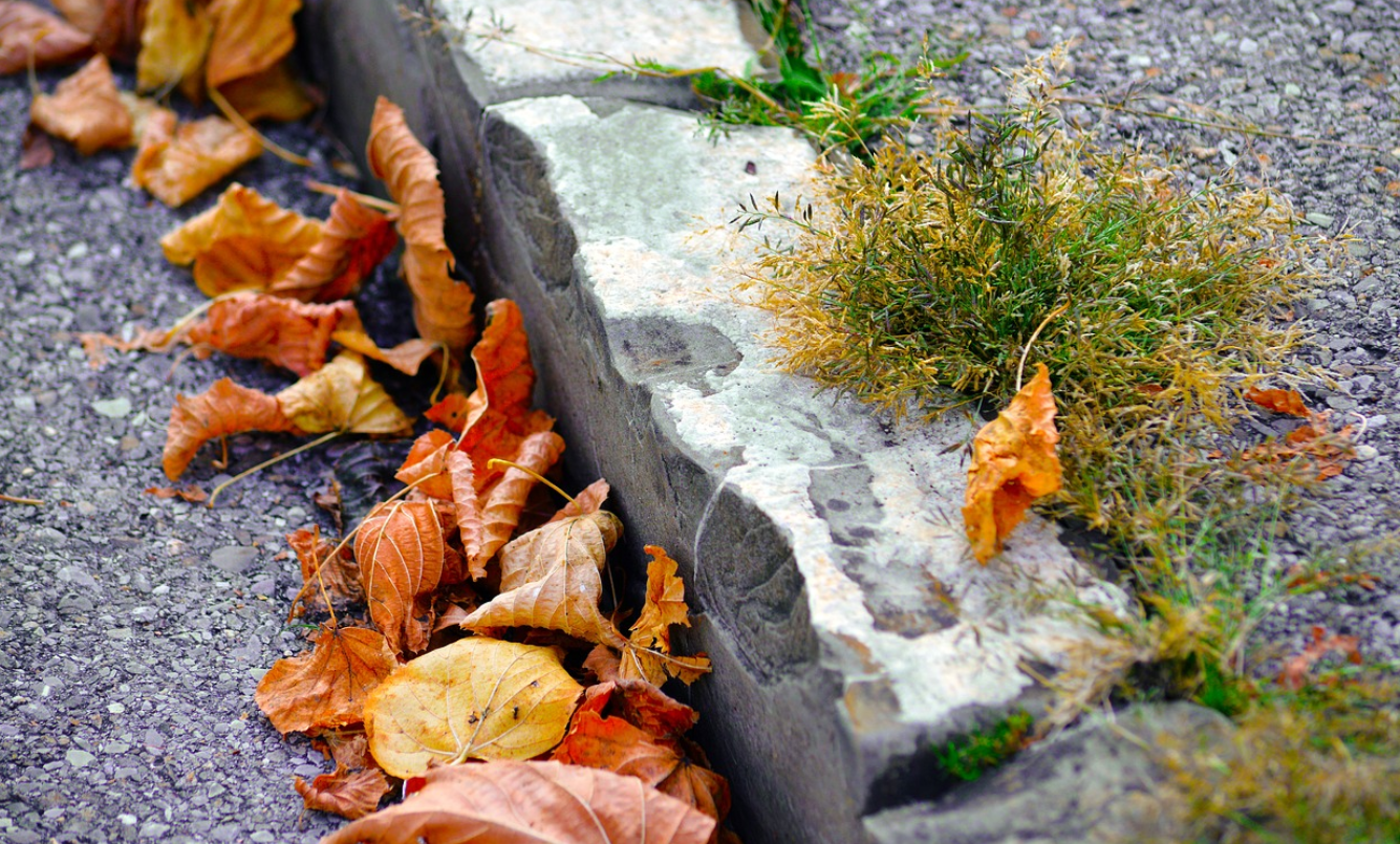 Curb with leaves in the gutter