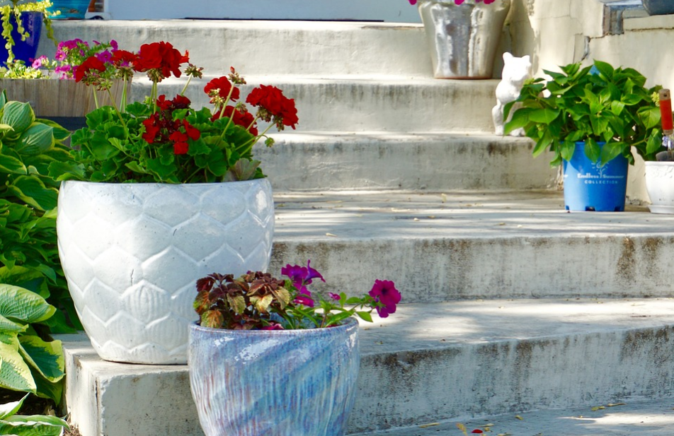 Concrete steps with potted plants