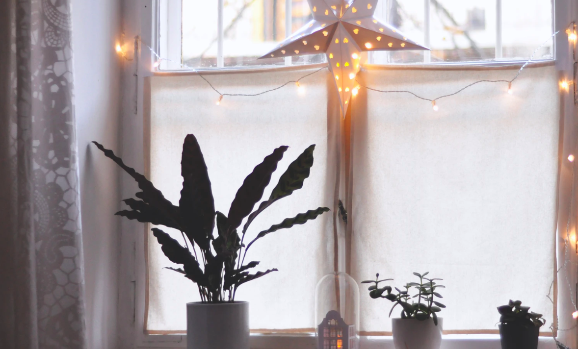 Plants and lights on windowpane