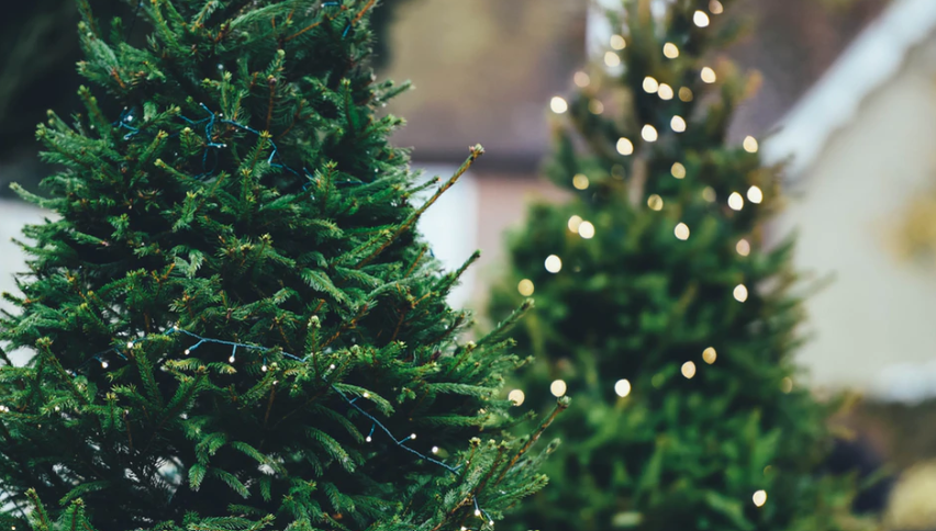 Your Christmas Tree How-To Guide: From Set-Up To Flocking & Lights