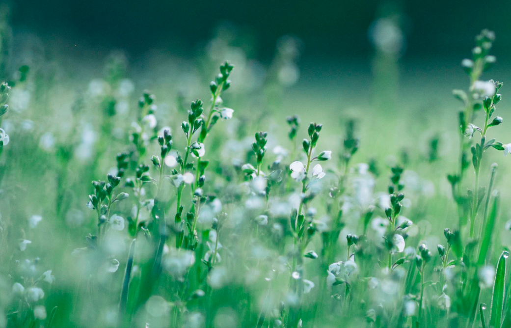 Meadows with raindrops