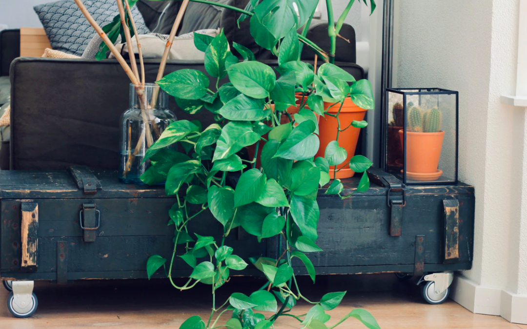 Tips & Tricks To Caring For Plants In Your Mobile Home