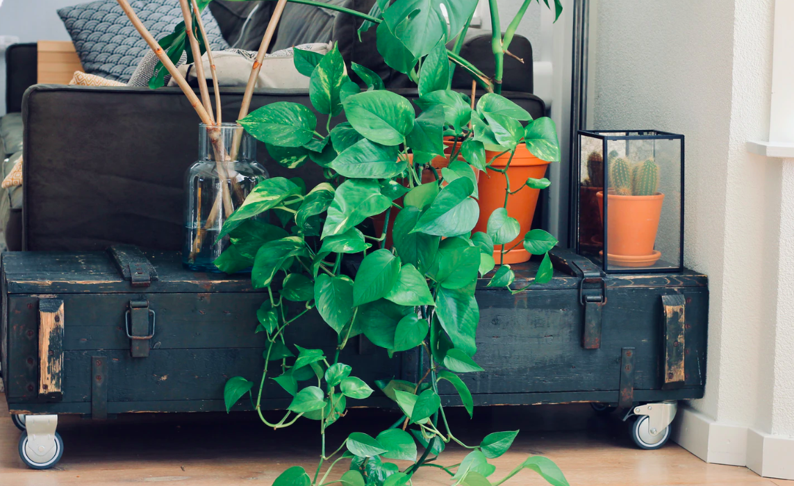 """Featured image for """"Tips & Tricks To Caring For Plants In Your Mobile Home"""""""