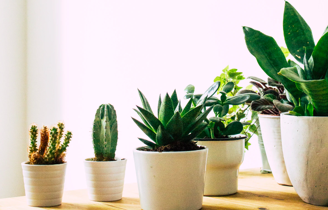 Various indoor potted plants