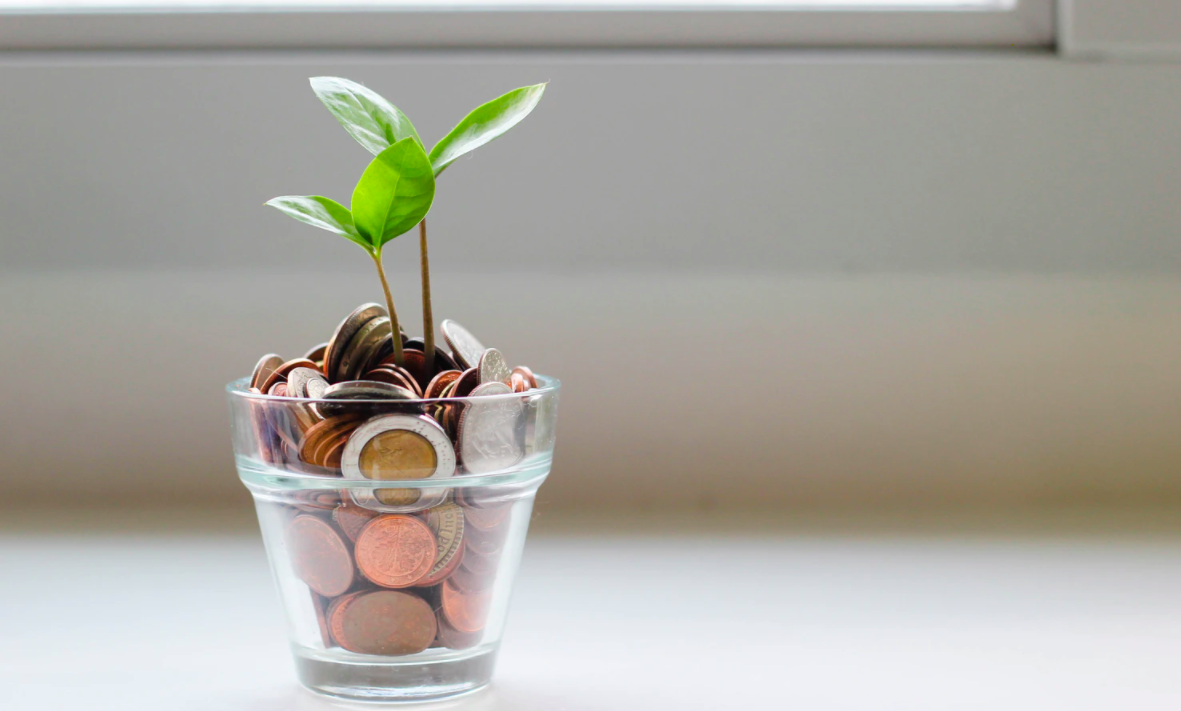Green plant in a vase of coins