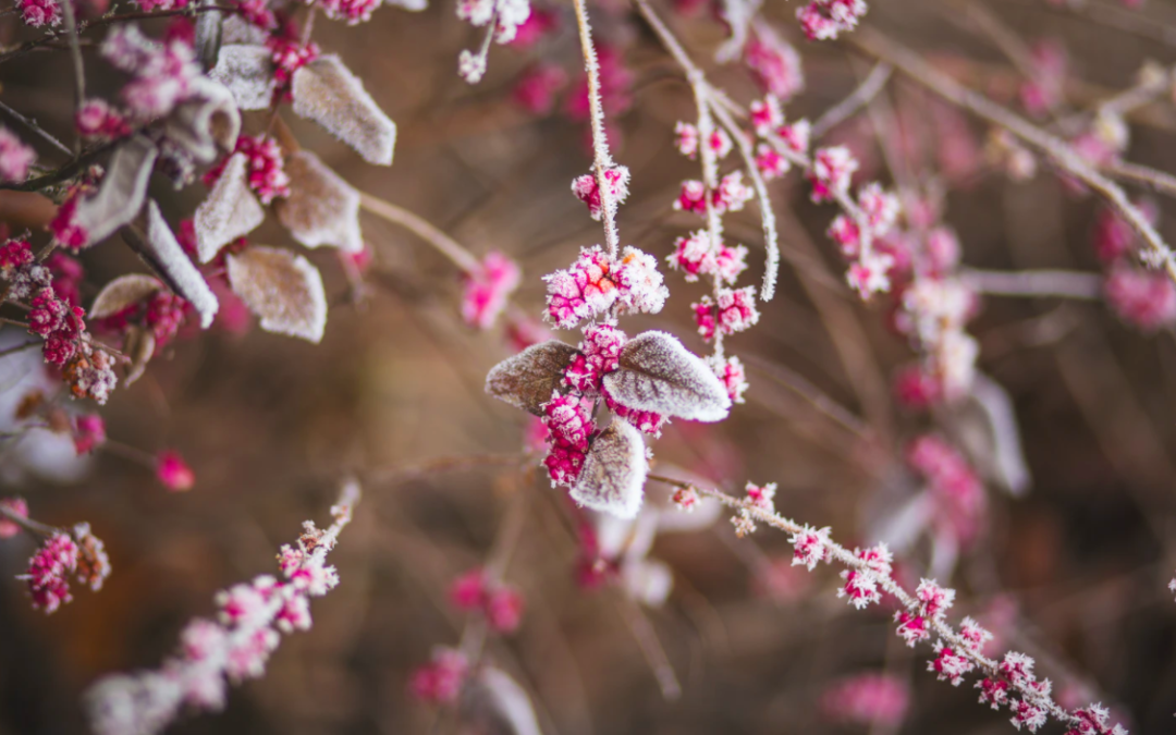 6 Cold Weather Landscaping Tasks You Can Do Before Spring