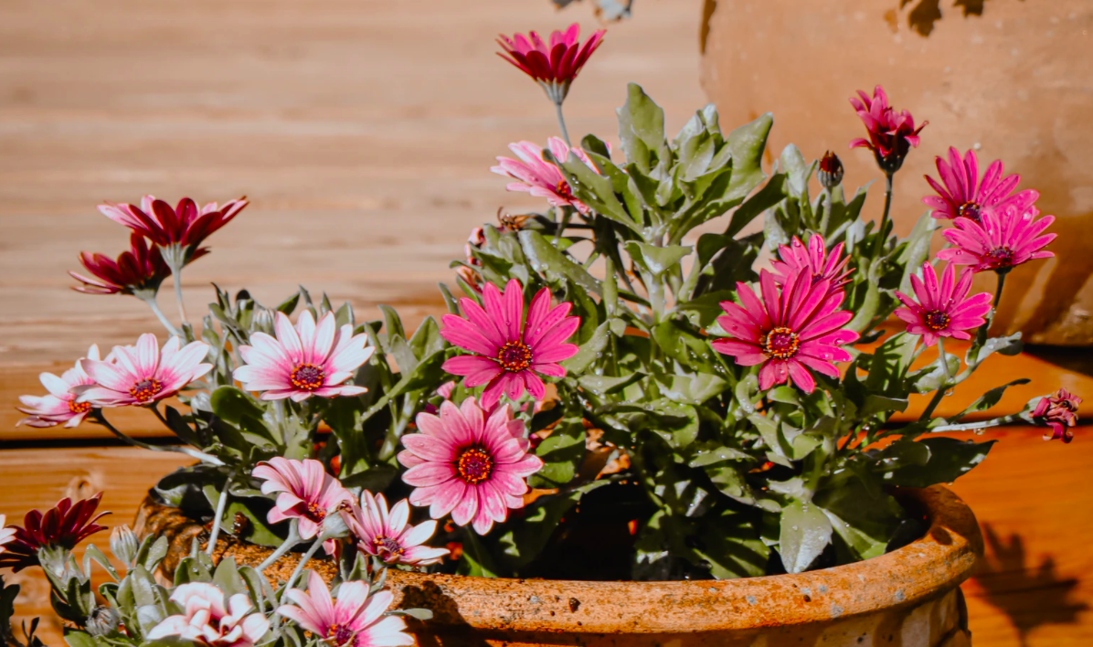 Potted flower plants