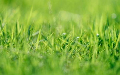 Top Lawncare Solutions For Ragged Mobile Home Yards