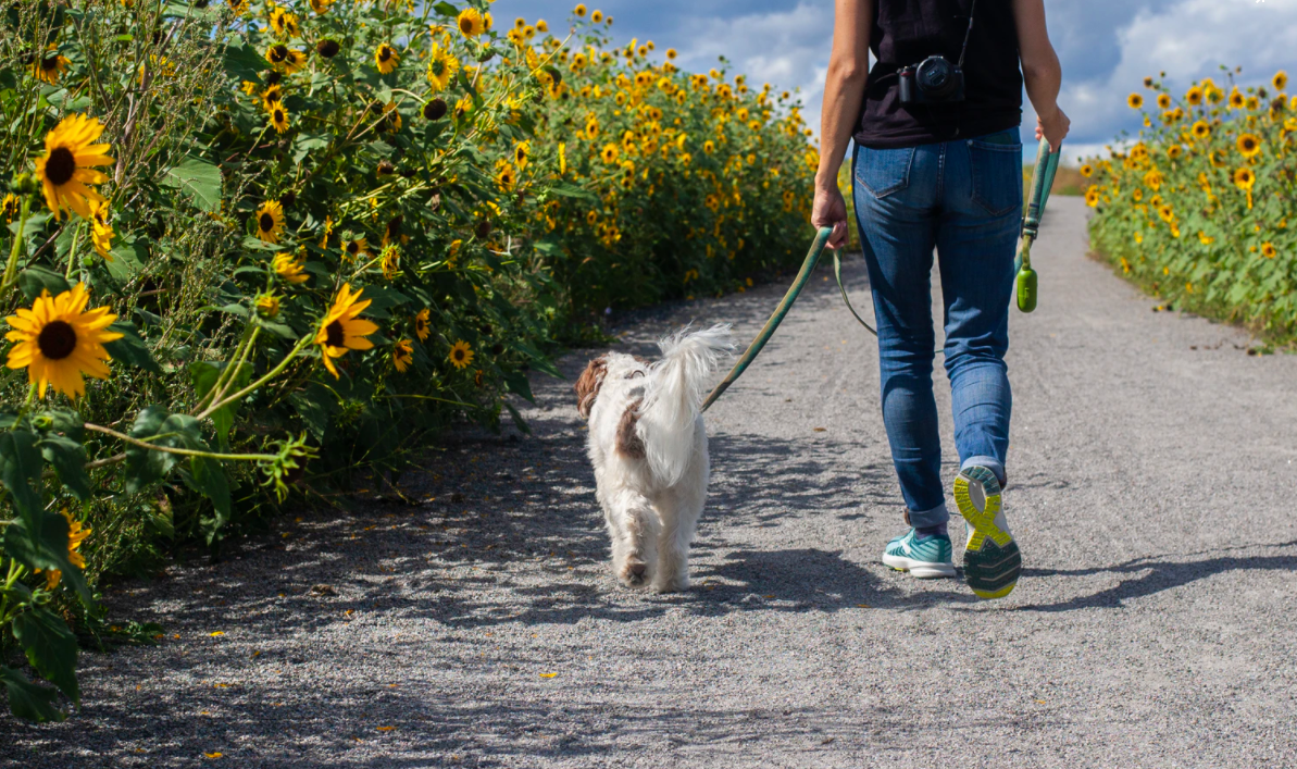 Walking with a dog outdoors